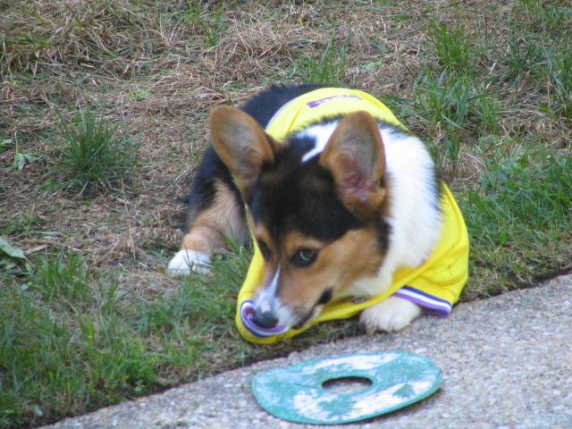 Dog shirt 022