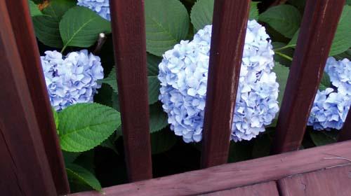 Prisoner_blue